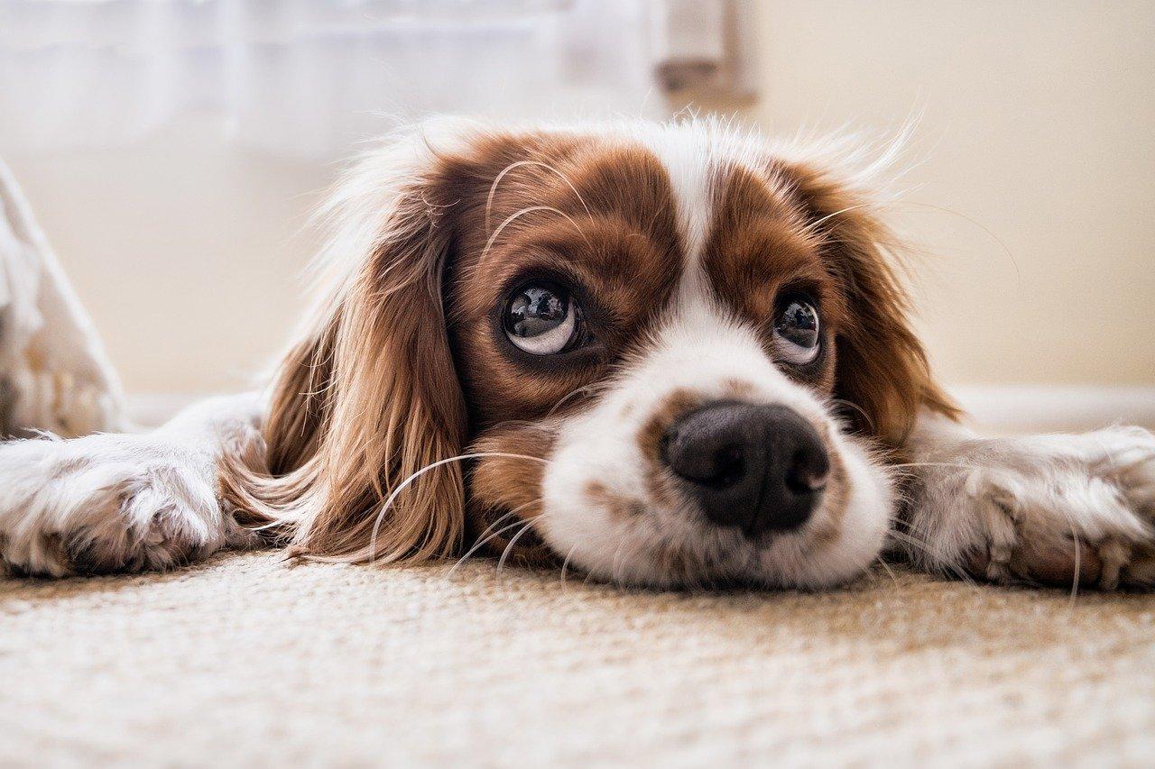 Las mascotas no transmiten el nuevo coronavirus